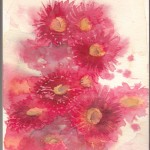 Red Gum Flowers (Watercolour)
