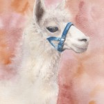 Alpaca (Watercolour)
