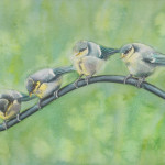 Baby Bluetits (Watercolour)
