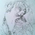 Koala (Graphite)