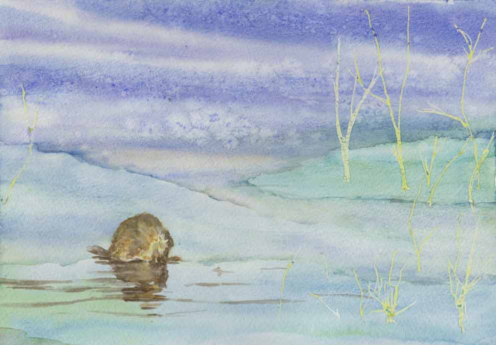 Muskrat (Watercolour)