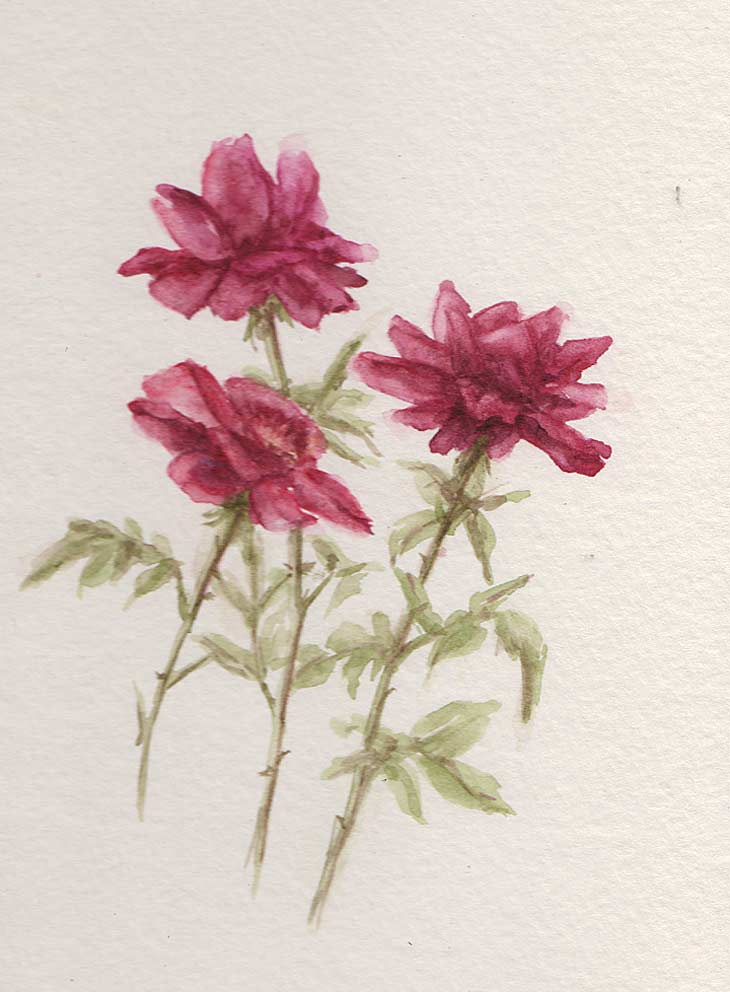 Plein Air Roses (Watercolour)