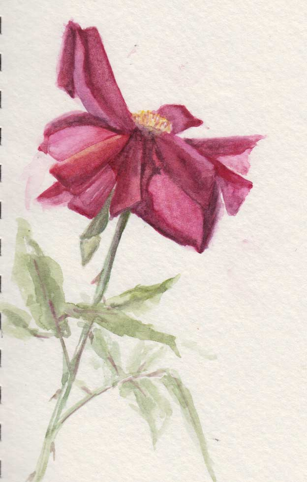 Faded Rose (Watercolour)