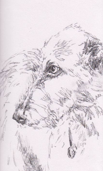 Irish Wolfhound (Graphite)