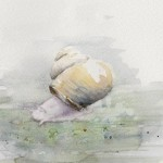 Snail (Watercolour)