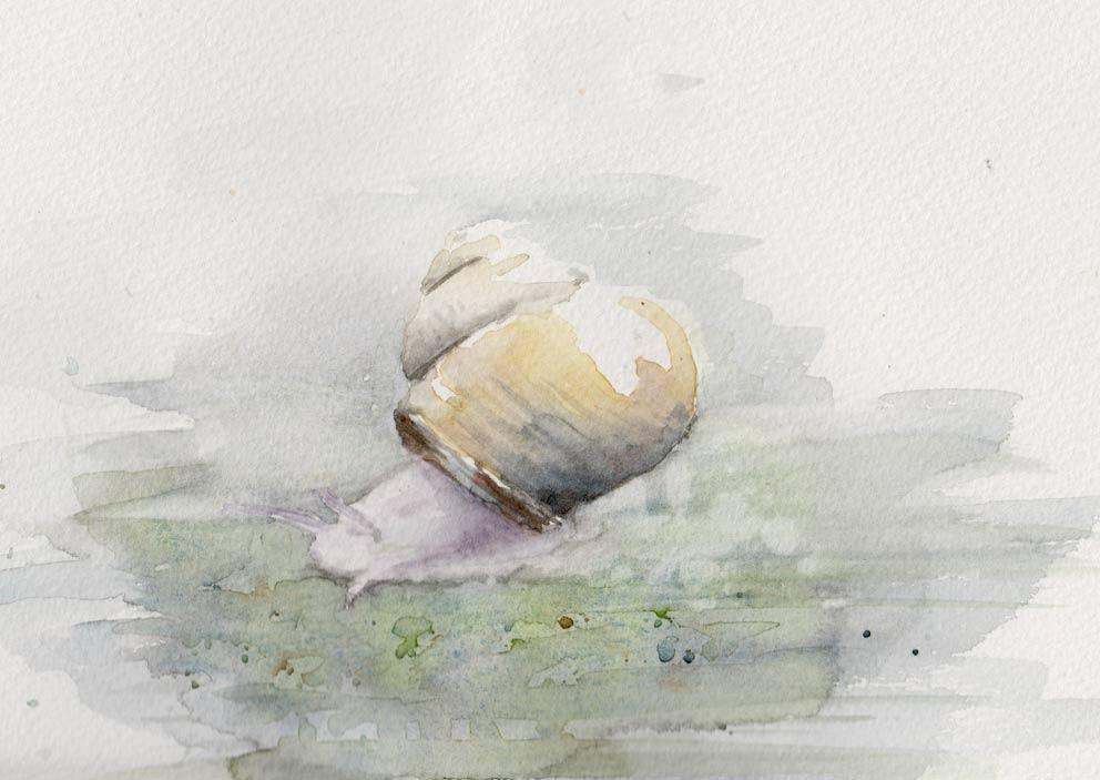 Snail (Watercolour)
