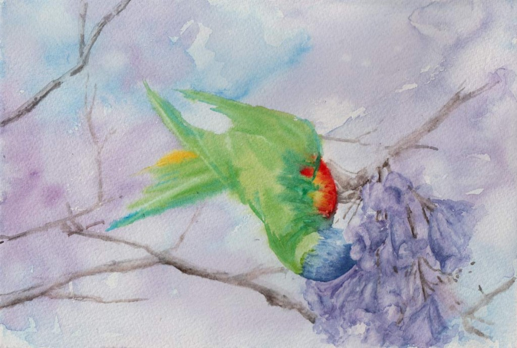 Lorikeet enjoying the Jacaranda Blossom (Watercolour)