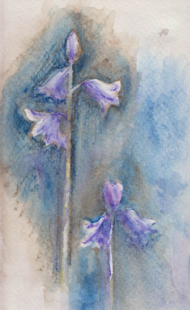 Sketchy Bluebells (Watercolour Crayon)