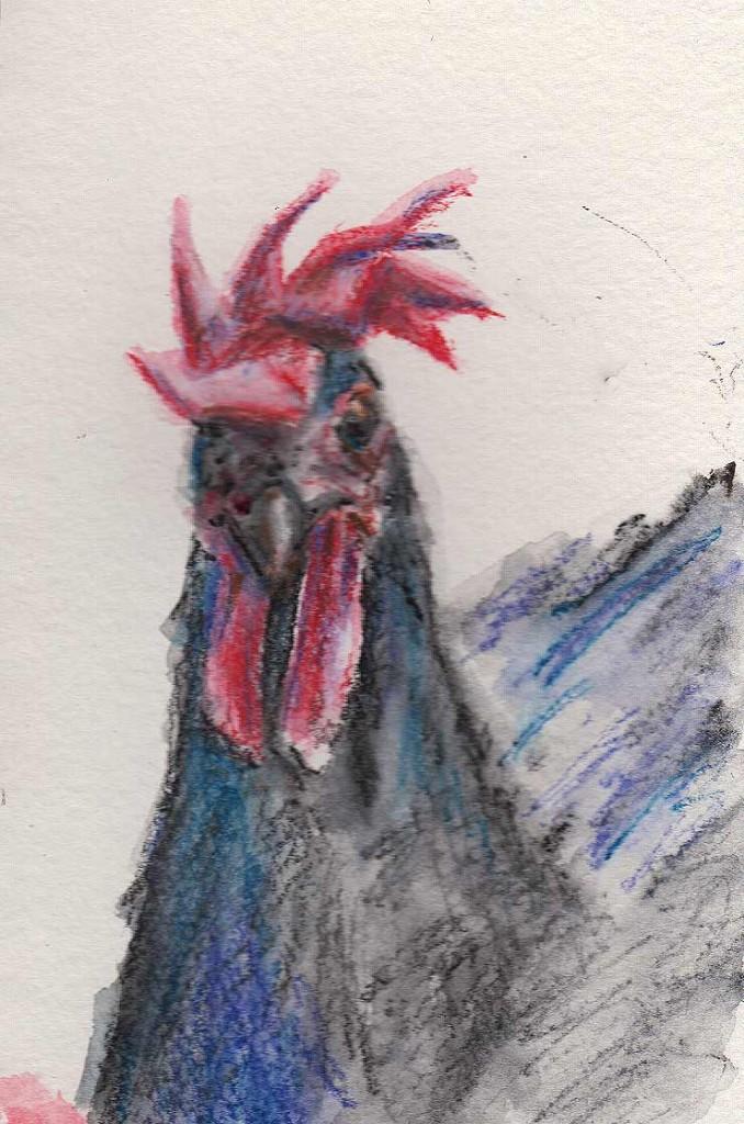 Chicken (Watercolour Crayon)