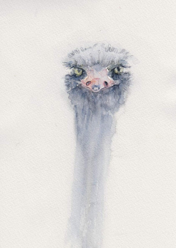 Funny Ostrich Sketch (Watercolour)