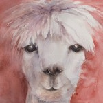 Alpaca (Watercolour Sketch)