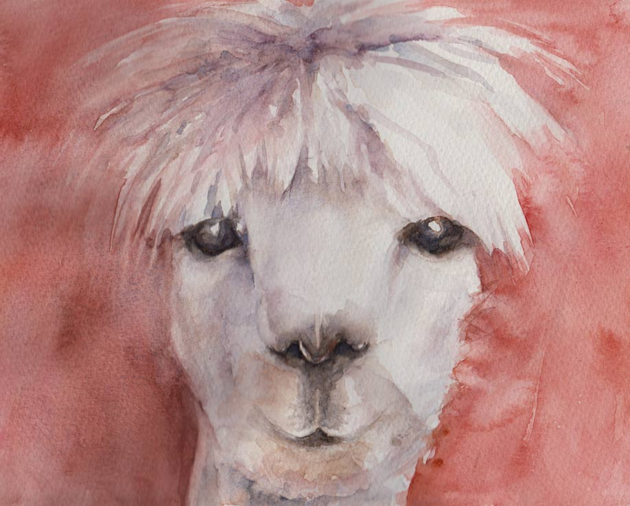 Alpaca Sketch in watercolour