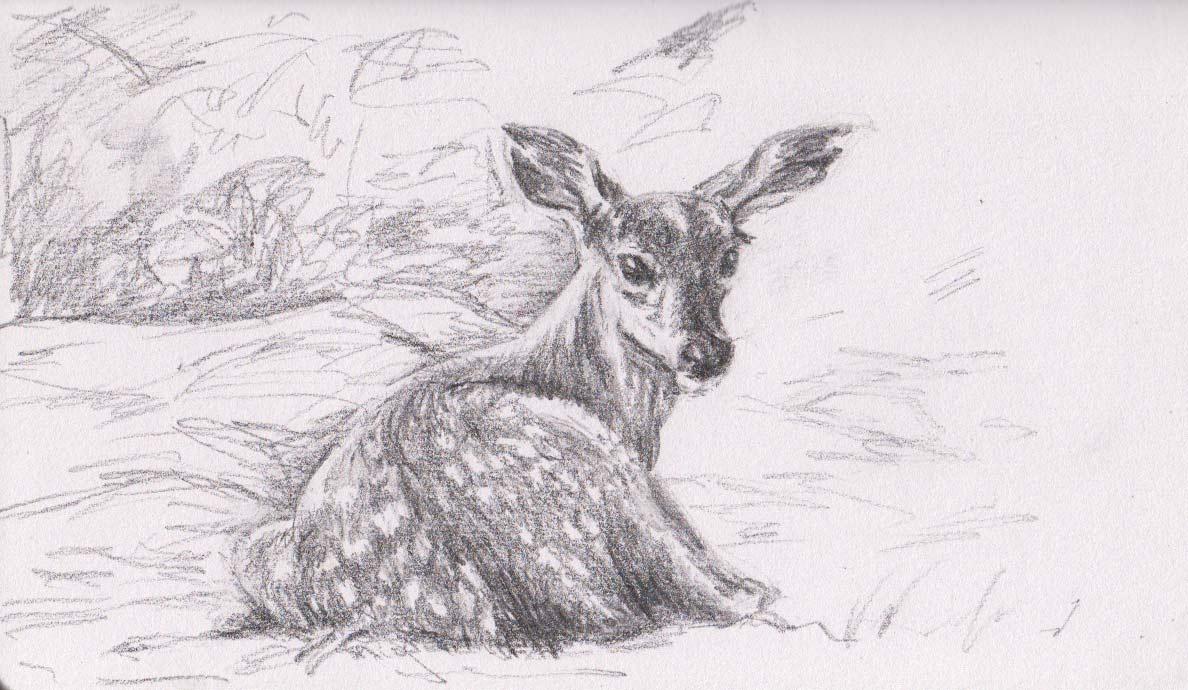 fallow deer fawn graphite