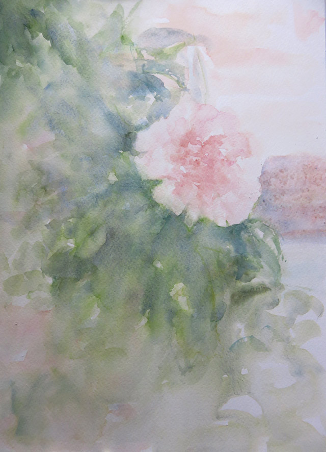 John's Rose (Watercolour)