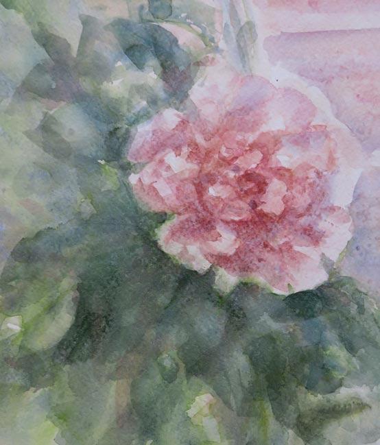 John's Rose (Watercolour)