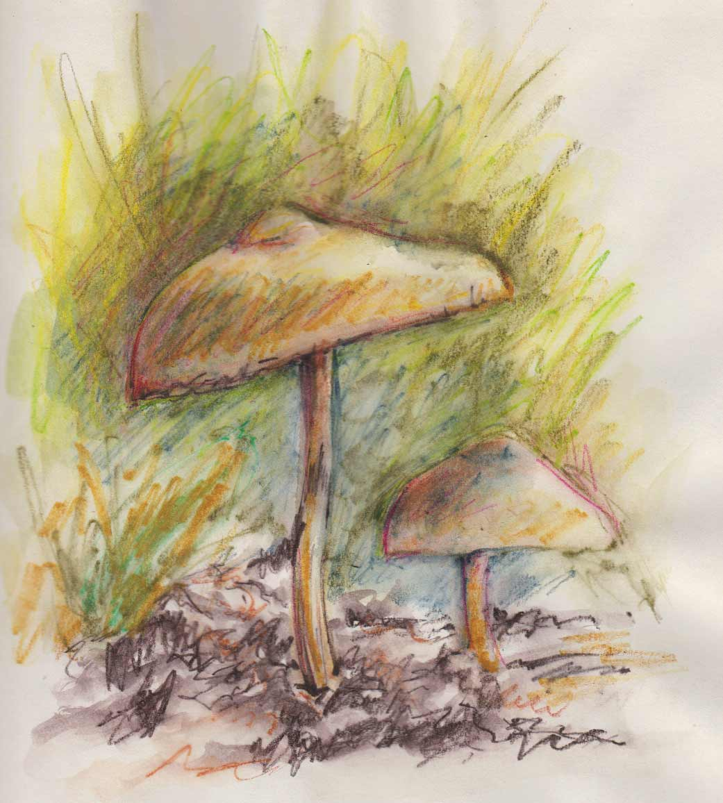 Early Morning Mushrooms (Inktense Watercolour Pencils)
