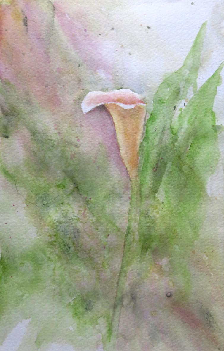 Zantedeschia, Spotted Lily (Watercolour)