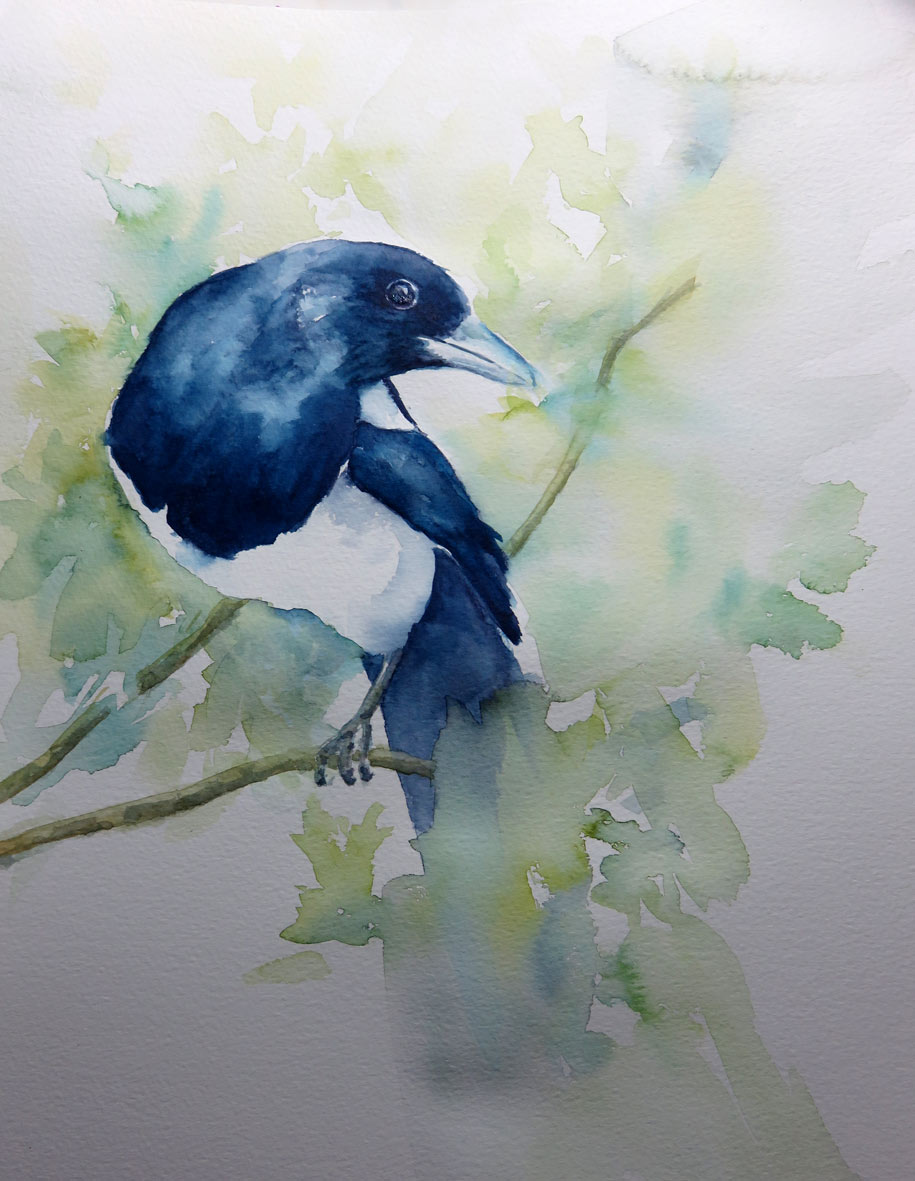 Magpie (Watercolour)