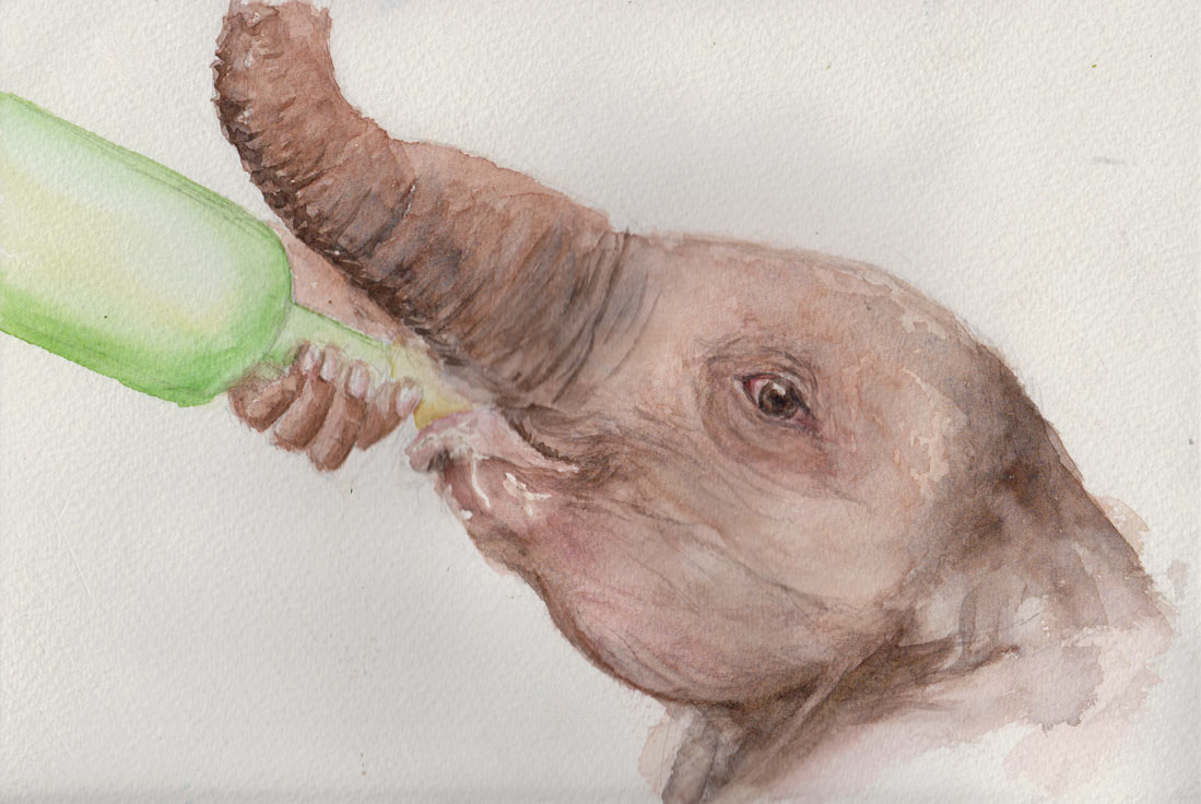 """Milk"" Baby Elephant (Watercolour)"