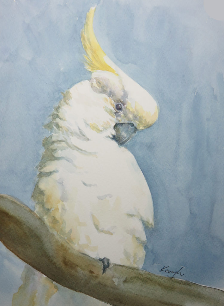 Sulphur Crested Cockatoo (Watercolour)