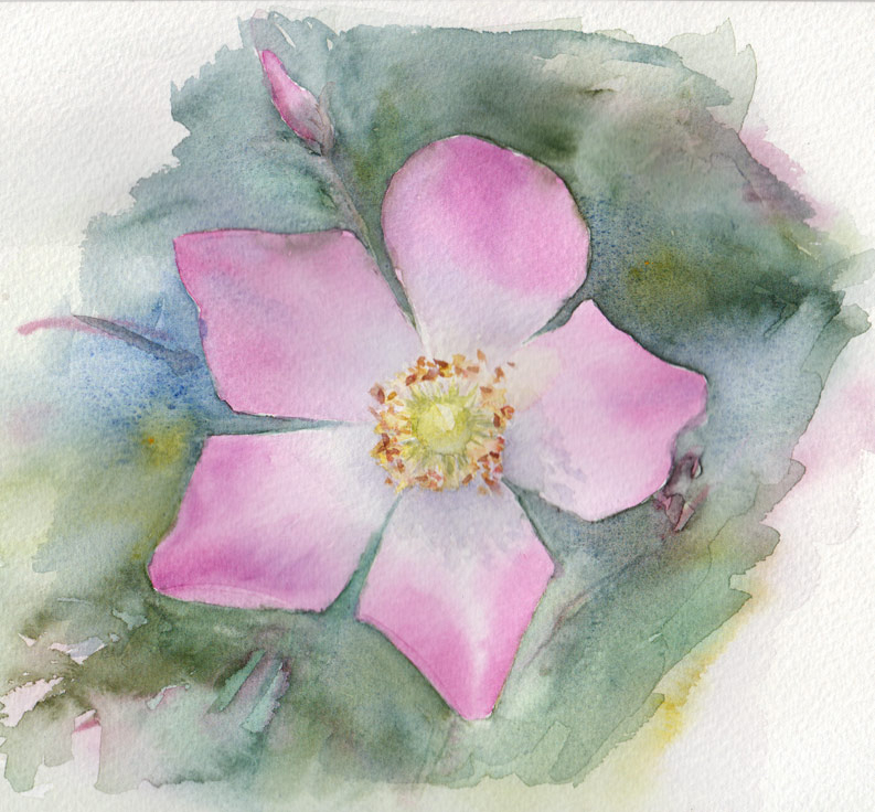 Challenge Day 3: Bramble Rose (Watercolour)