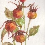 Rosehips (watercolour)