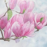 Magnolia Flowers (watercolour)