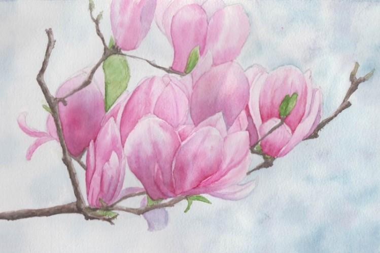 Magnolia Flowers (watercolour)
