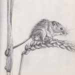 Harvest Mouse (Graphite)