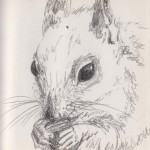 Squirrel (Graphite)