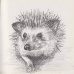 Hedgehog (graphite)