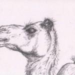 Camel (Graphite)