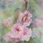 Ornamental Plum Blossom (Watercolour)