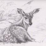 Fallow Deer Fawn (Graphite)